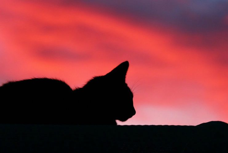 How to be with your pet during the death process: Tibetan Buddhist practices