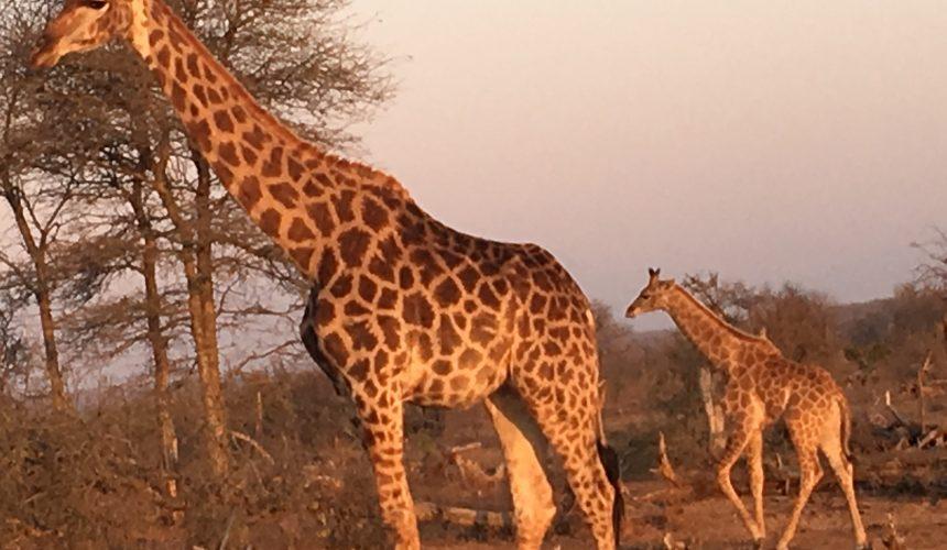 Shiny eyes: Join me on the next Mindful Safari