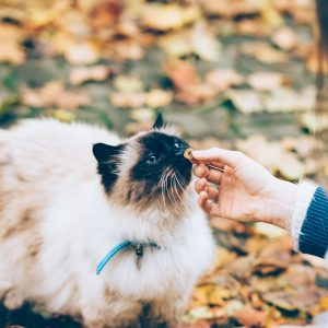 Happiness, food and The Art of Purring