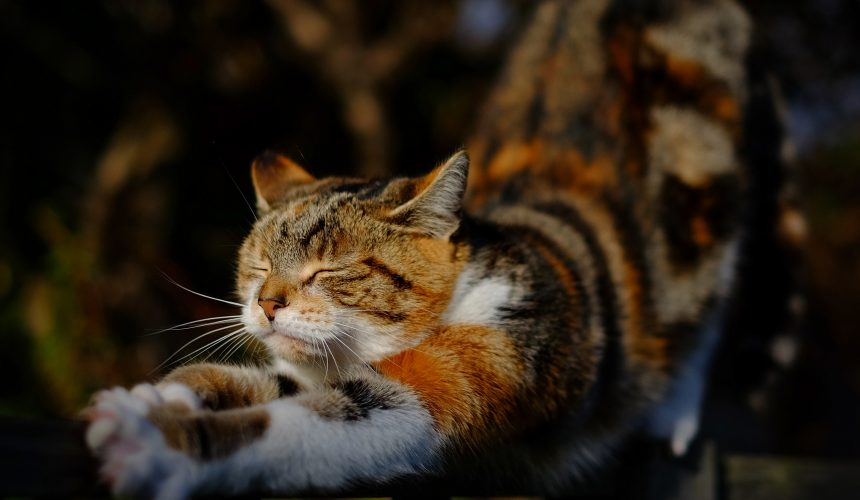 Yoga and The Art of Purring