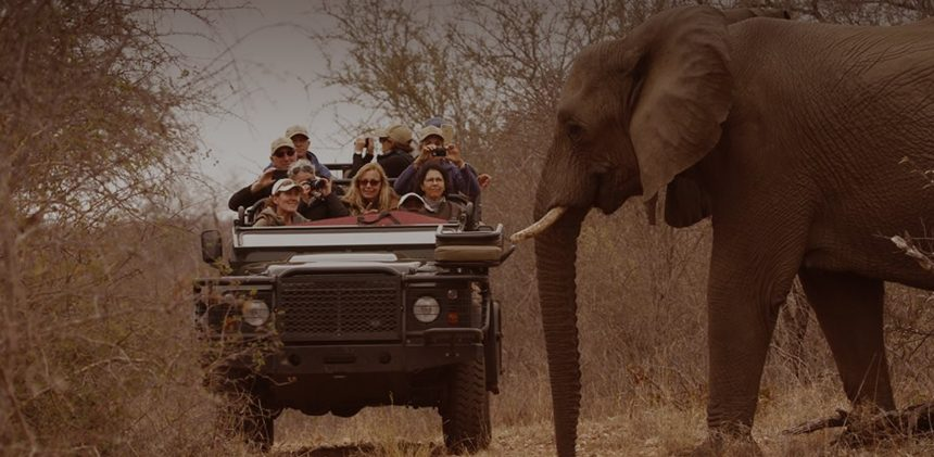 The Fascinating Science behind Mindful Safari