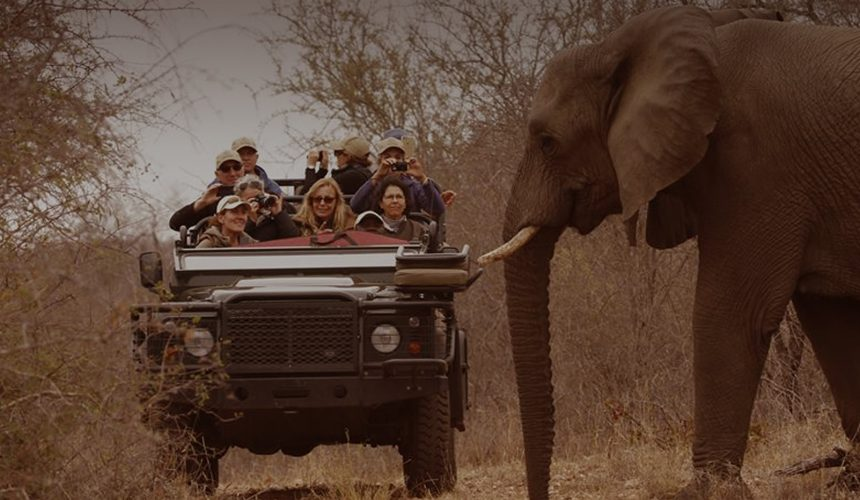 The Fascinating Science behind Mindful Safari