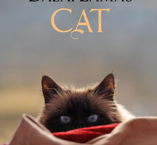The unexpected joy of writing The Dalai Lama's Cat series