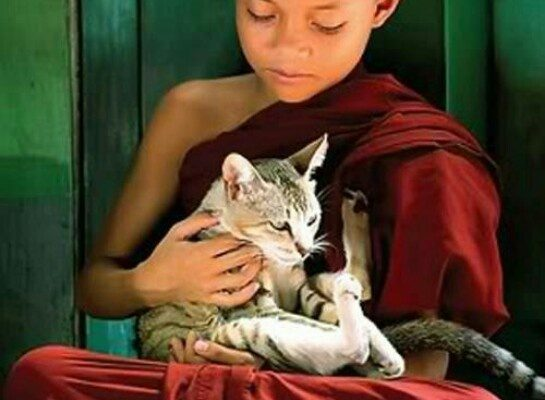 Can a human come back as a cat – and vice versa?  The Buddhist view.