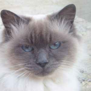New Dalai Lama's Cat book …and other exciting news!