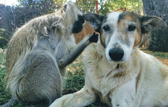 Twala Trust Animal Sanctuary – A Place to Call Home